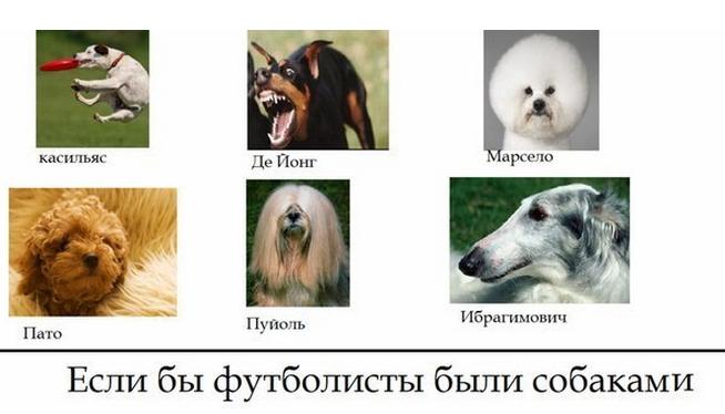 Футболисты_собаки